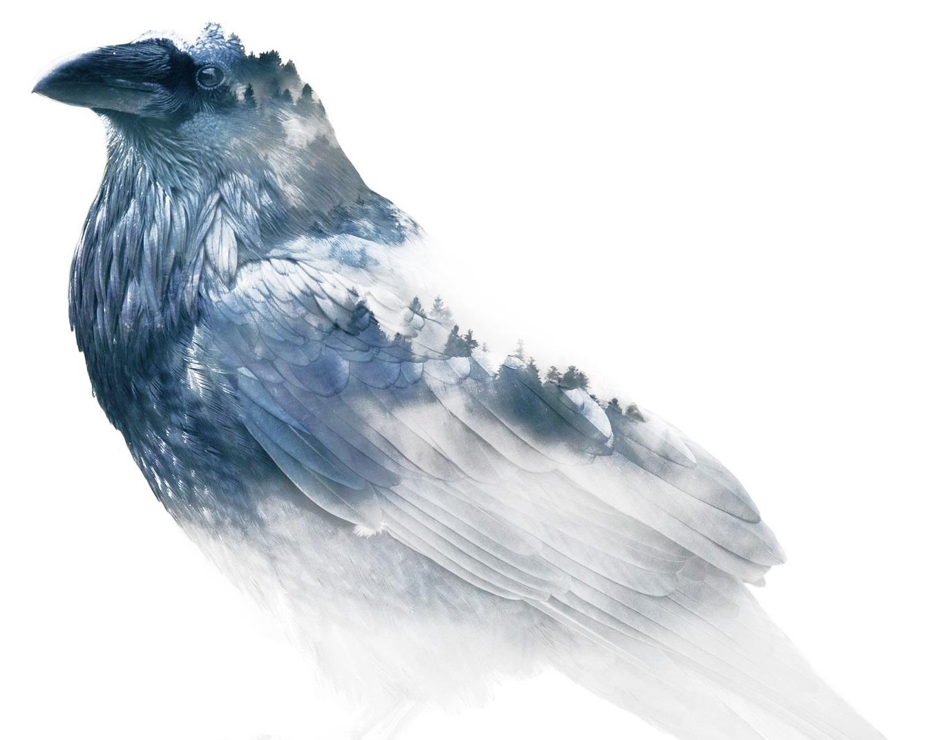 raven-3109587_1920.jpg